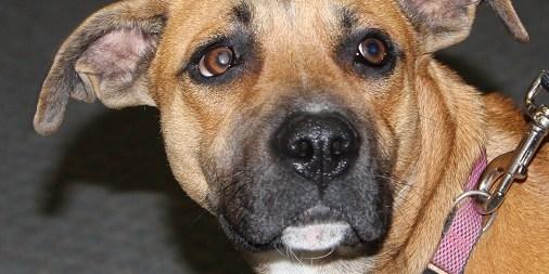 Adopt Holly: A Constant Companion