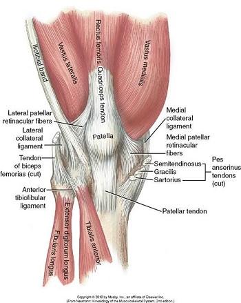 Overcoming Knee Pain - Chapelboro.com