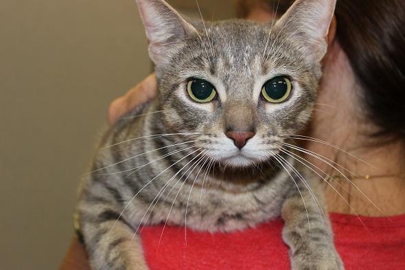Adopt Flora: A People Cat
