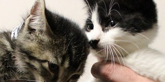 Adopt Crispus And Lucian: Lively Kittens