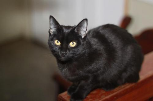 Adopt-A-Pet: Melissa