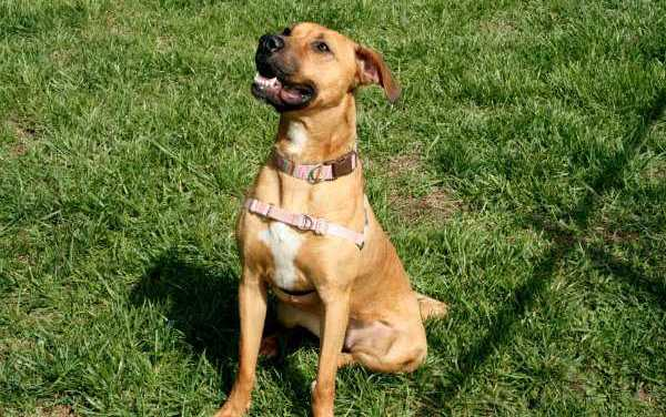 Adopt-A-Pet: Nell