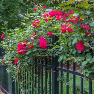 guskiewicz-garden-5_34517534444_o