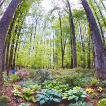 "1st place - Ms. Shawn Bailey - ""Woodland Canopy"""