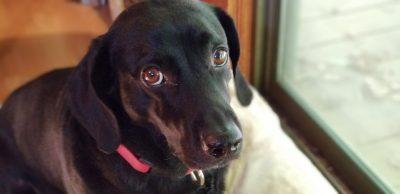 Frank Lloyd Wright, dog