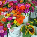 Carrboro flowers
