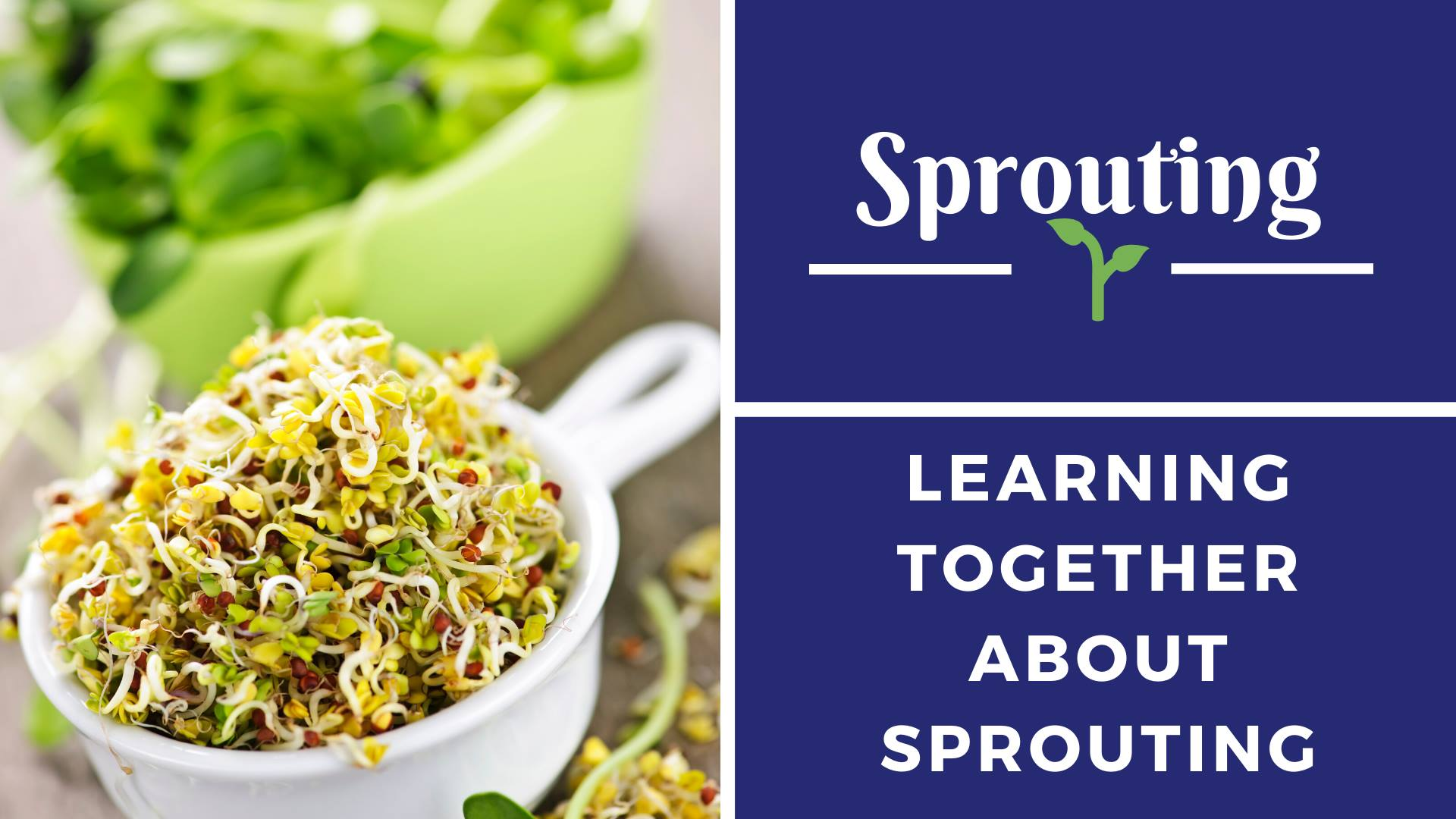 Eat loads of sprouts for long term health benefits