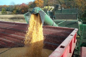 Corn yield increase