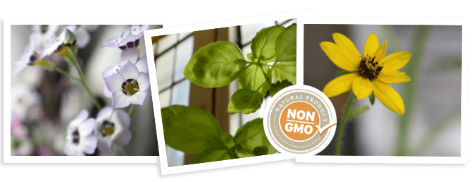 wildflower seed paper non gmo