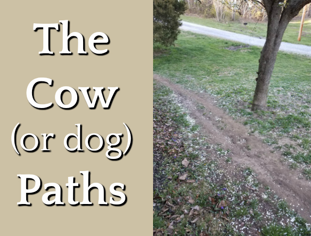 The Cow (or dog) Paths