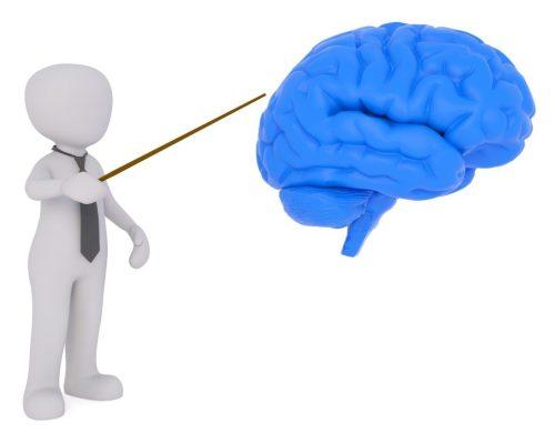 cerveau-developpement-personnel-neurones