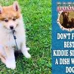 Doggie-Dish-1200x630