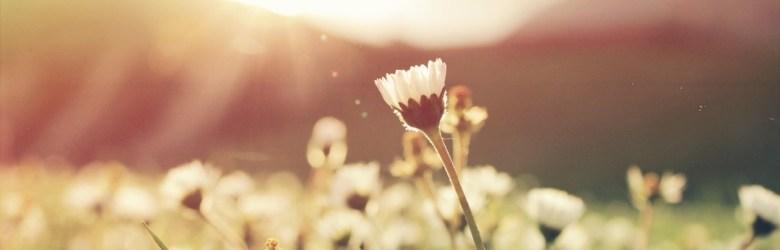 flowers - Endometriosis & Charcoal