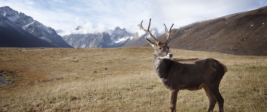 deer - Q and A: Using Pure NonScents to keep Hunting Clothing Odor Free