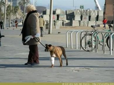 Perrito en Barcelona