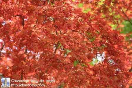 Colores del otono en el Huwon