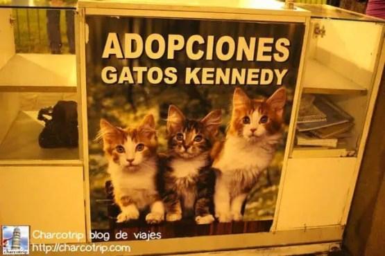 adopciones-gatos-kennedy