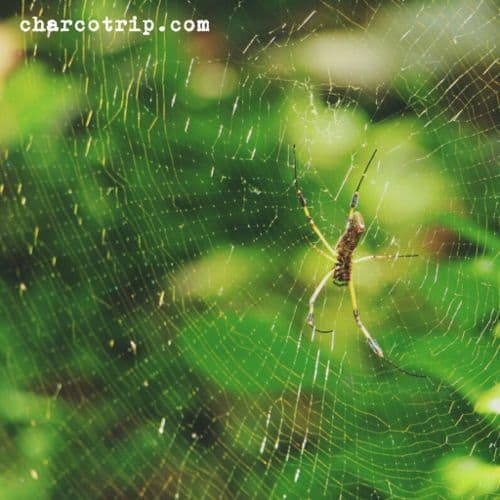 Hola araña