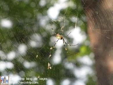 Una araña