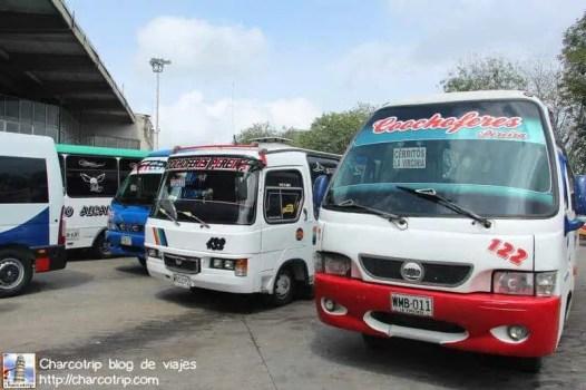 Autobuses Pereira