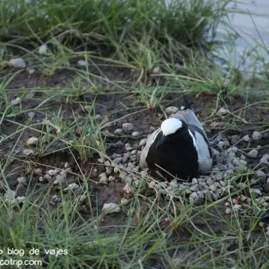 Ave en su nido