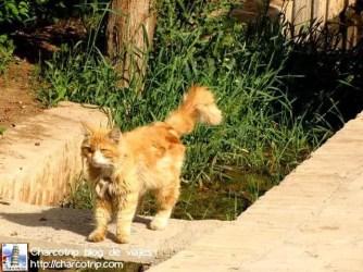 Miau, en farsi también se entiende