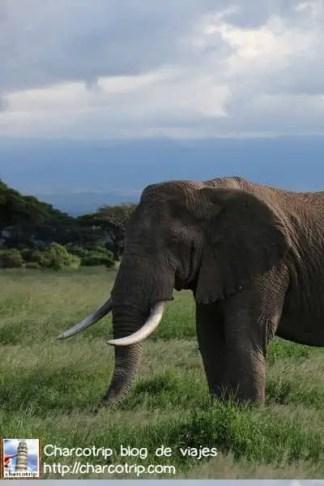 elefante13