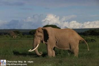 elefante22