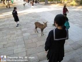 Estudiante y ciervo