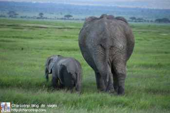 familia-elefante2