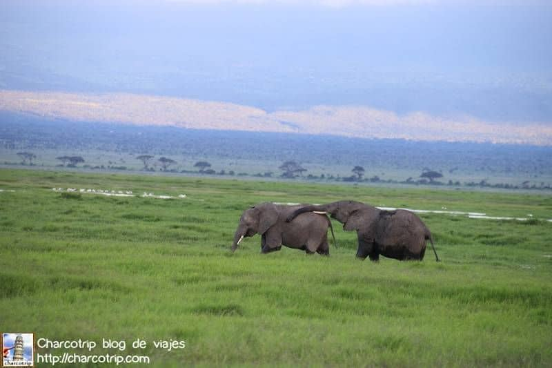 familia-elefante4