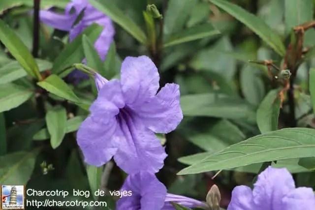 flores-panama-1