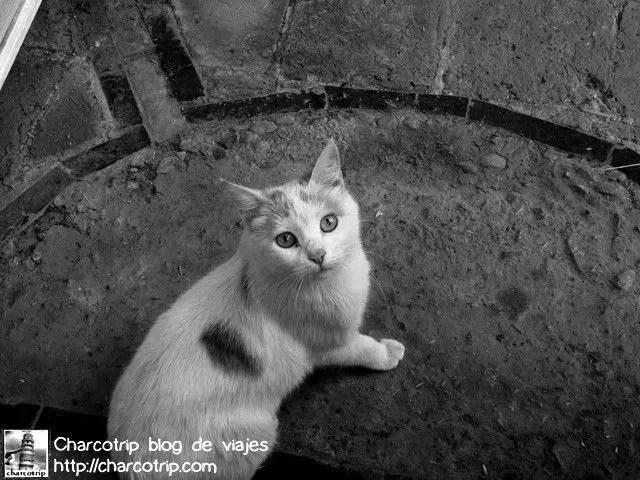 Este lindo gatito nos miraba comer y debatir sobre el tema del hotel XD