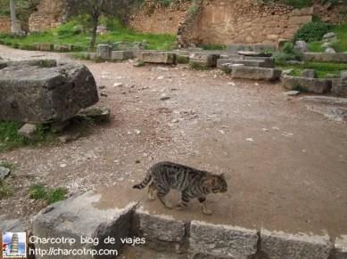 Gato guia