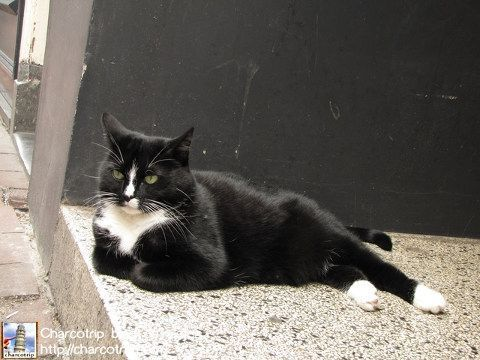 Un gatito tumbado en la puerta de un negocio, como si nada!