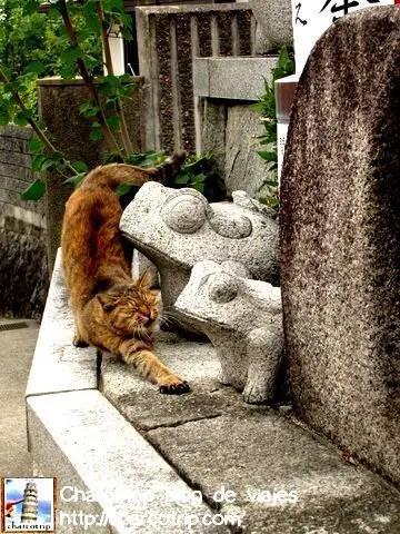 Y también nos encontramos con un gato adorador de las ranas :D
