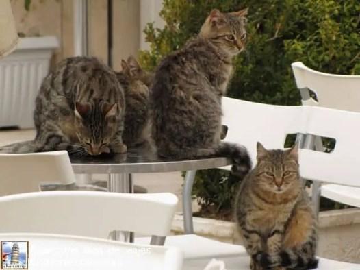 Ejercito de gatos guia
