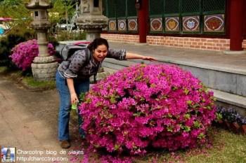gran-buda-suwon-flores