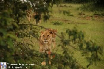 leonas-masai-mara1
