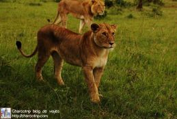 leonas-masai-mara3