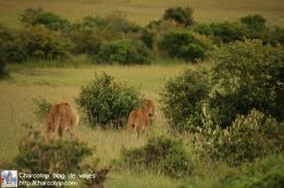 leonas-masai-mara6
