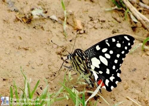 Una mariposa!