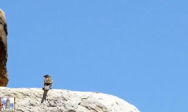 Y aquí uno posando en la Tumba de Ciro