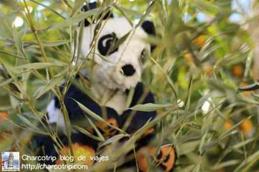 panda1-menton