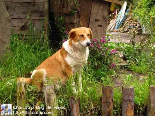 Perrito de Xochimilco