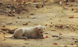 perro-delhi