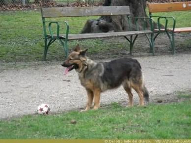 Vimos este perrito futbolero en el camino