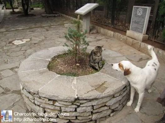 Discusión gato perro