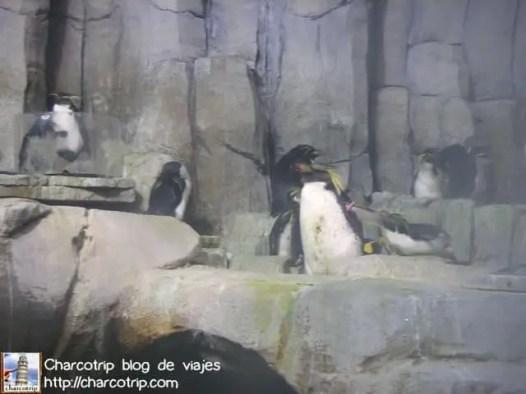 pinguinos-biodome