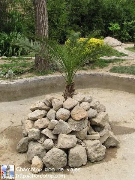 Palma con roca